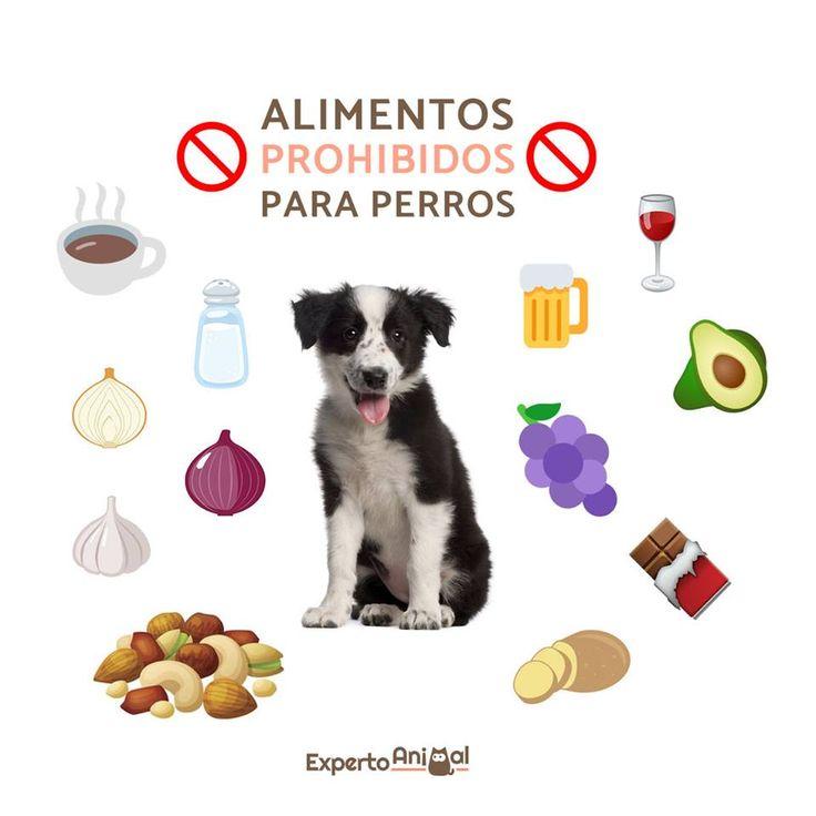 ¡Alimentos prohibidos para perros! #ExpertoAnimal #MundoAnimal #ReinoAnimal #Animales #Naturaleza #Perros #Perritos #Canes #Mascotas #Infografia