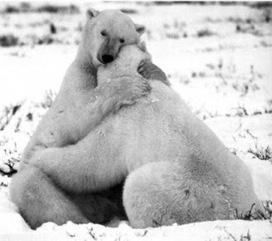 Síndrome coleccionista: ¿Porqué un abrazo debe durar más de seis segundos? Elsa Punset.