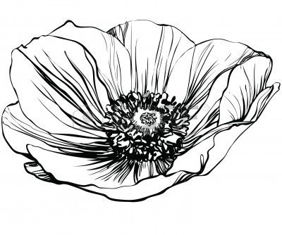une fleur photo noir et blanc du pavot Banque d'images