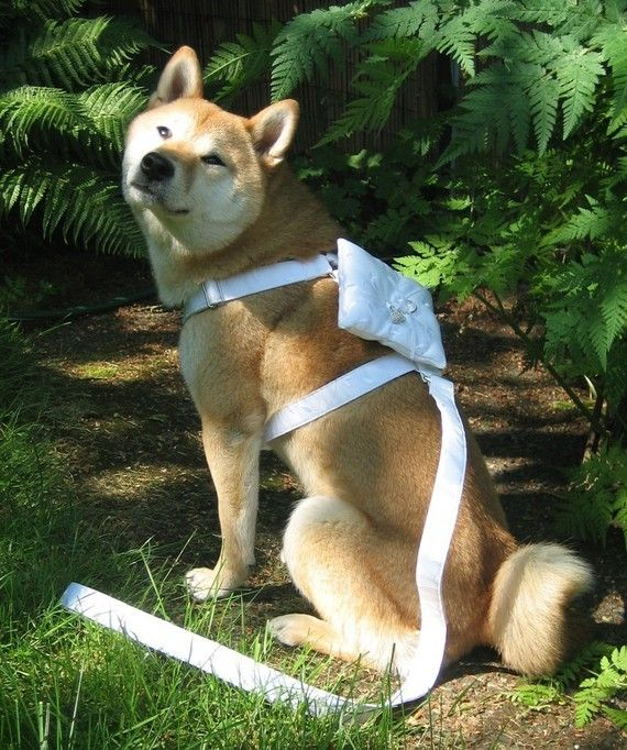 Ring bearer pillow harness for dogs. So cute! Obviously this will happen!