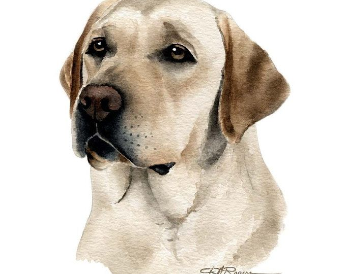 CHOCOLATE LAB Labrador Dog Art Print by Artist DJ Rogers