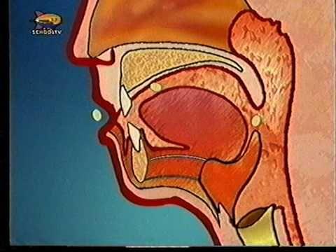 3.21  Vergiftiging  filmpje EHBO - 4. Vergiftiging - YouTube