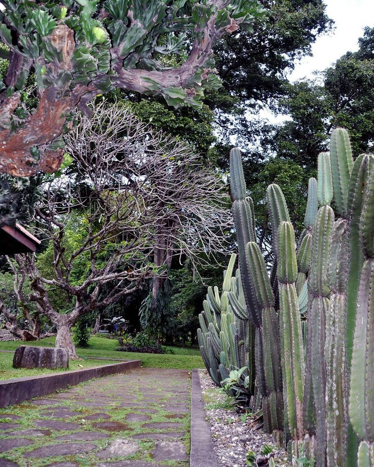 Hundreds of species of succulent plants scattered in the Mexico Park. Starting from the dwarf which makes you have to bending over for a review see up to doubling your height. The beauty and uniqueness of the desert world are exposed here. #lavamilia