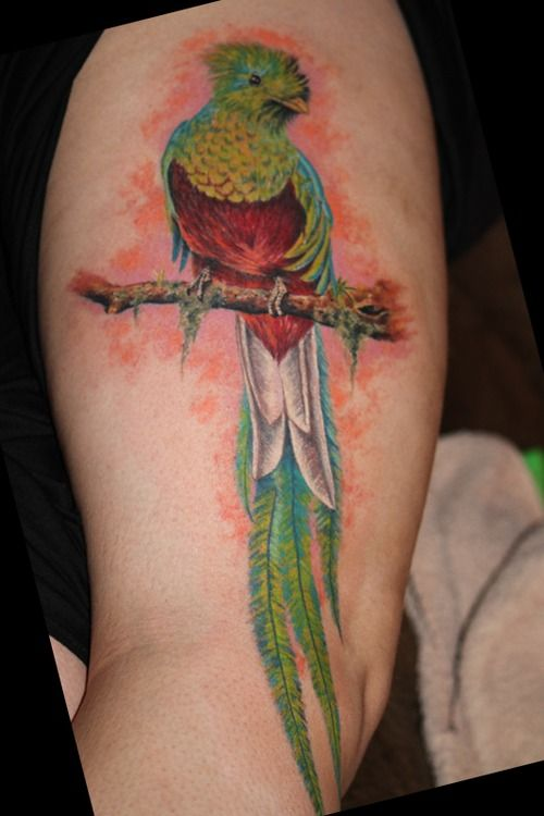 143 best images about bird butterfly images and tattoos for Quetzal bird tattoo