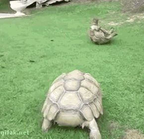 TURTLE DUMP or... I LIKE TURTLES. A small collection of turtle gifs