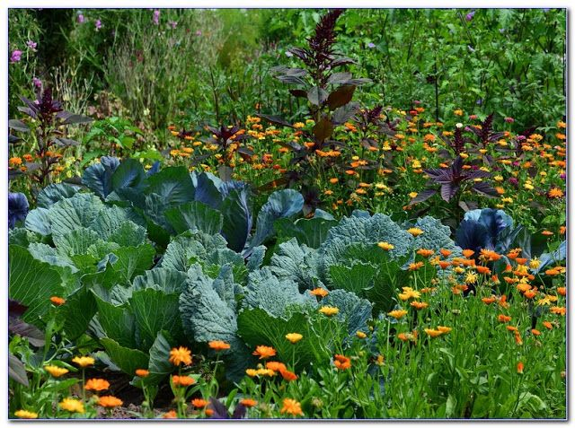 Pin On Permaculture Garden