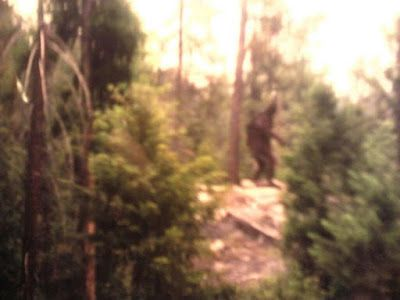 | new footage happy camp bigfoot photo monday august 13 2012