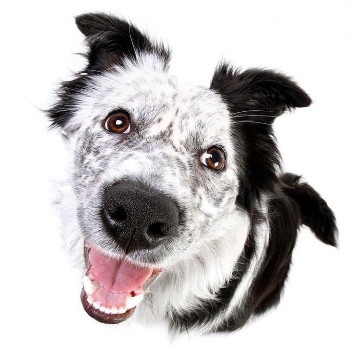 Creative studio photo of a pet dog Perth