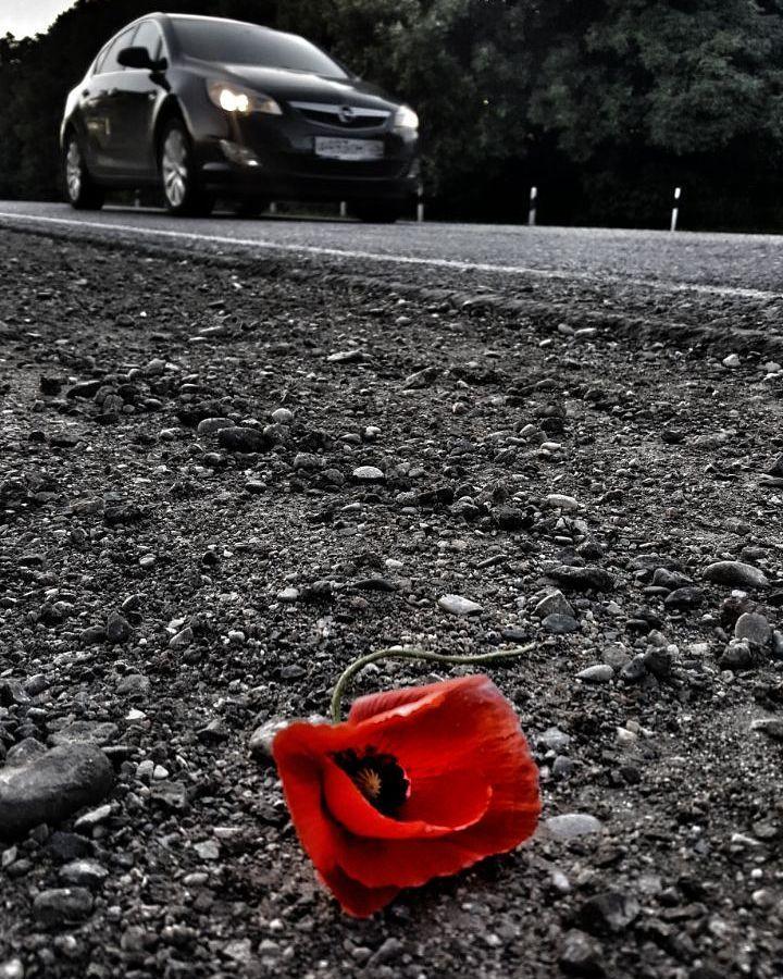 """""""Взгляните на небо. И спросите себя: «Жива ли та роза или ее уже нет? Вдруг барашек ее съел?» И вы увидите: все станет по-другому..."""" / Антуан же Сент-Экзюпери """"Маленький Принц"""" /  ⤵⤵⤵ #PRO Маки от Гаянэ ( @armyanochka777 ) ➡ Лента #инстаграм пестрит яркими красками маковых полей, от самых диких и маленьких Ставропольских, до бескрайних Крымских. Бесконечное количество селфи, портретов, совместных фотографий, профессиональных фотосессии в маках, на маках, вместе с маками, вместо маков, маки…"""