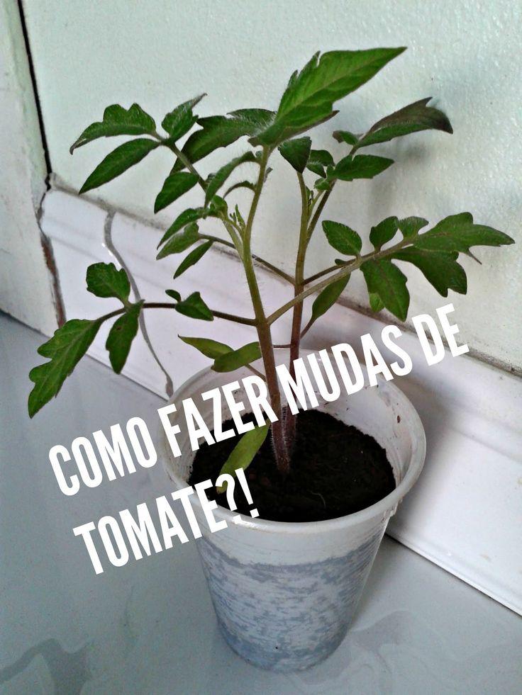 COMO PLANTAR TOMATES A PARTIR DA SEMENTE