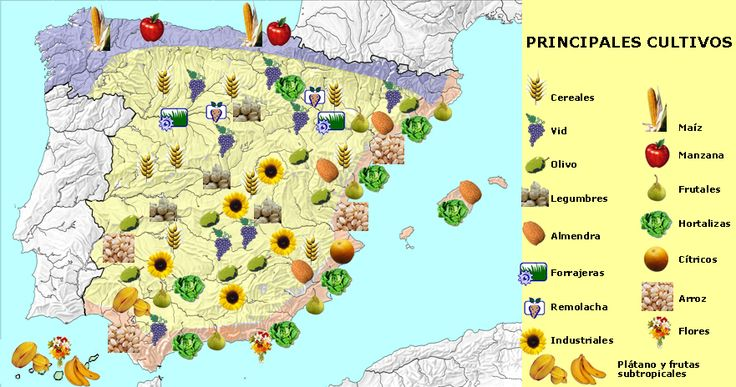 1. LOS ESPACIOS RURALES.   El espacio rural o agrario es el territorio donde se desarrollan las actividades agrícolas, ganaderas y la explo...