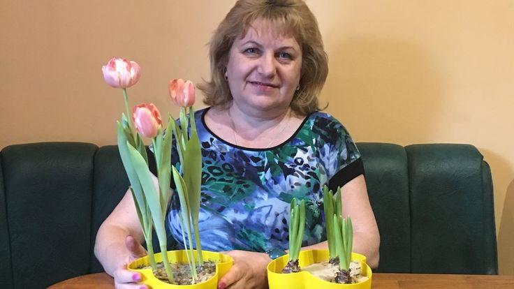 Тюльпаны подарили - что делать?