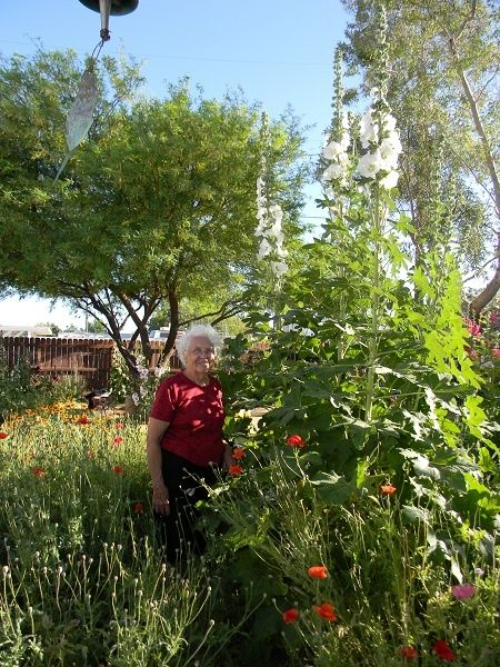 Mom and the tallest hollyhock she has ever grown, Las Vegas, NV.