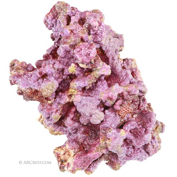 Premium Live Rock by ARC Reef For Sale For Your Marine Aquarium and Saltwater Fish Tank. 100% Sustainably Aquacultured and Shipped Direct From the Reef.