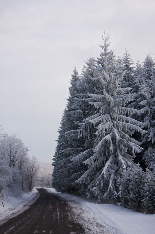 Hoar frost on the road through the forest in Tully, NY