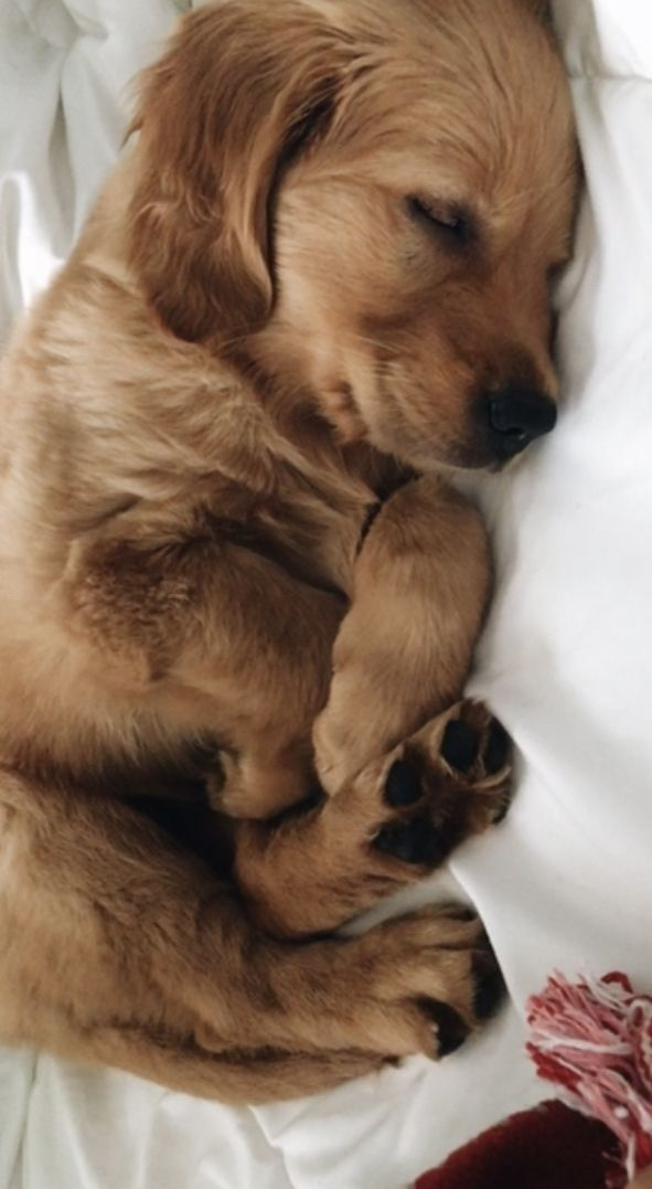 Pin By Devanshimohantry On Cute Dogs Cute Baby Animals Cute