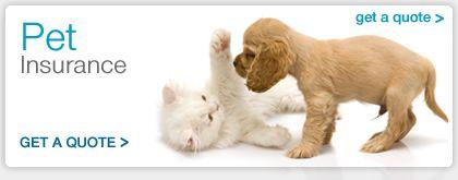 http://www.comparethebigcat.co.uk/insurancequotes/lifestyle/cheappetinsurancecomparison Pet Insurance