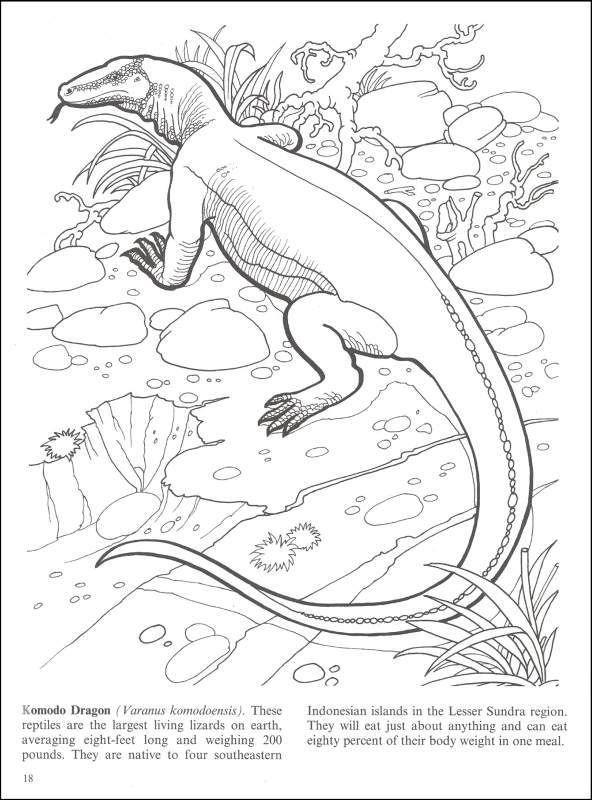 Komodo Dragon Coloring Page : komodo, dragon, coloring, Endangered, Animals, Coloring, Dover, Publications, Dragon, Page,, Animal, Books,, Pages