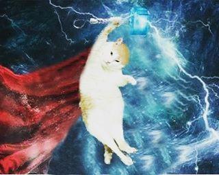 阿瑪:「朕是雷神索瑪!」Ama:I'm a super hero!! (謝謝網友 陳恩茹 P圖)#고양이 #cat #ねこ #neko #neco #貓 #fumeancat #Thor