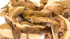 Очистки от картофеля – богатый источник крахмала, который так нужен смородине. От него ее ягоды вырастают до размера вишни.  Поэтому возьмите за правило не выбрасывать картофельную кожуру, а собирать,…