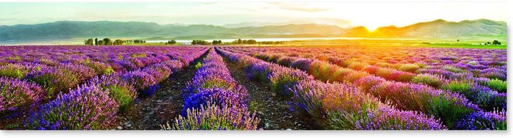 Young Living FarmEssential Oil