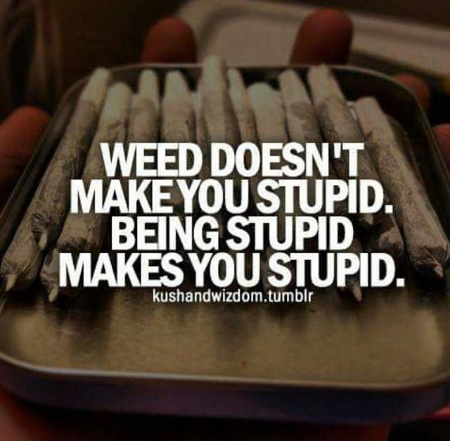 Do you agree? Weed doesn't make you stupid. Being stupid makes you stupid.