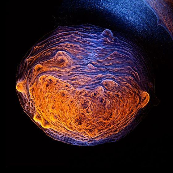 Instant Tudomány: Ilyen gyönyörű mikroszkóp alatt a whisky – fotók - HVG.hu