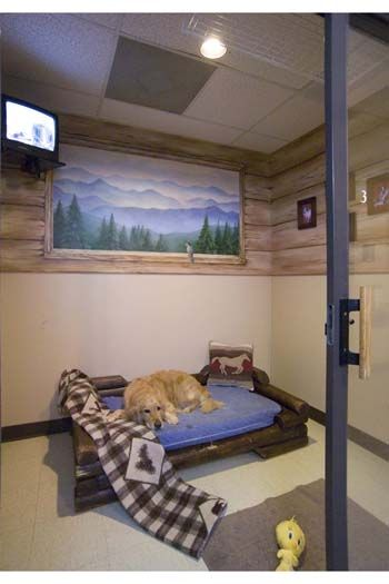 A Luxury Suite at Rover Oaks Pet Resort in Houston, Texas!