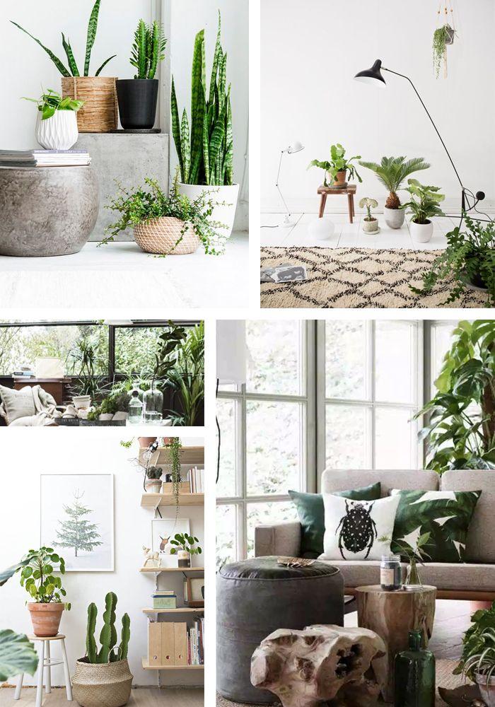 woontrends 2016 planten