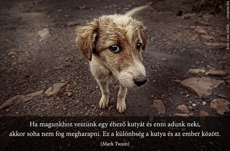 Mark Twain idézete a kutyákról.