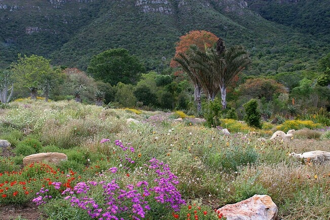 The Kirstenbosch National Botanical Garden.