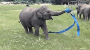 I have decided this might be the happiest elephant on the planet...