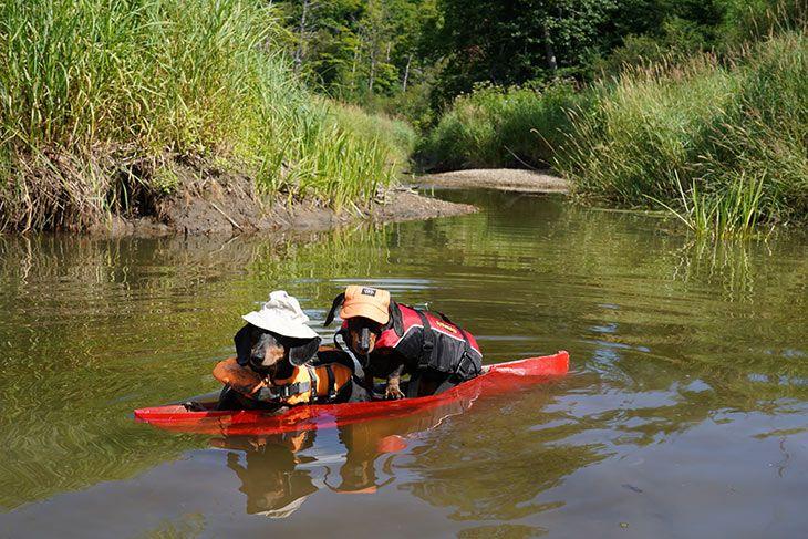 Episode 5 The Boys Go Camping Canoe Fail Deleted Scene Canoe Go Camping Episode 5
