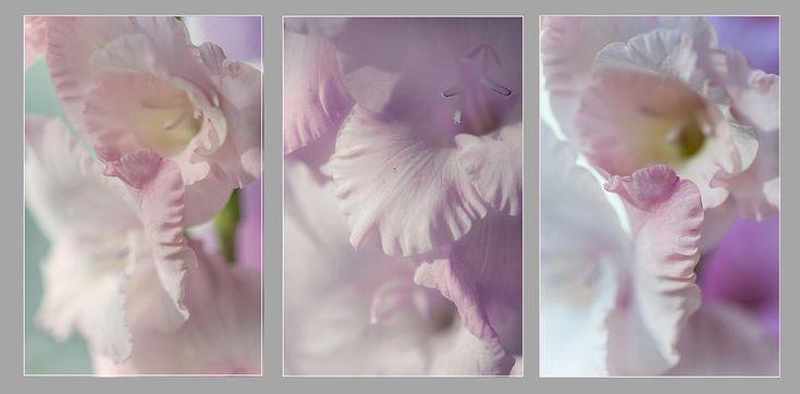 Pastel Gladiolus Triptych Photograph by Jenny Rainbow