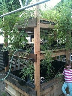 Aquaponics - to try in the dry tropics