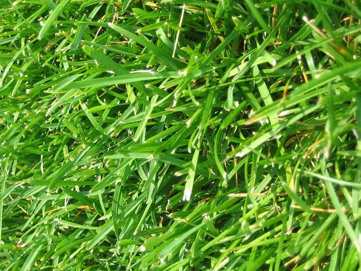 What Type of Grass Seed Is Best for Clay Soil?