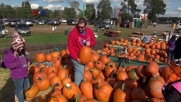 Labu parang merupakan salah satu produk utama panen musim gugur di AS, populer untuk makanan dan dekorasi Halloween. Perubahan iklim dan pancaroba tahun ini telah menyusutkan jumlah panen labu, mempengaruhi sejumlah pertanian skala kecil. Ikuti liputan VOA dari Cox Farms, Centerville, Virginia.  Di YouTube: https://youtu.be/BHolyq2kPOg