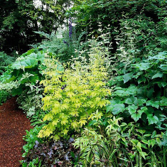 Shade plants garden ideas photograph statement in your sha for Landscaping without plants