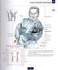 Resultado de imagem para ejercicios de antebrazo con mancuernas