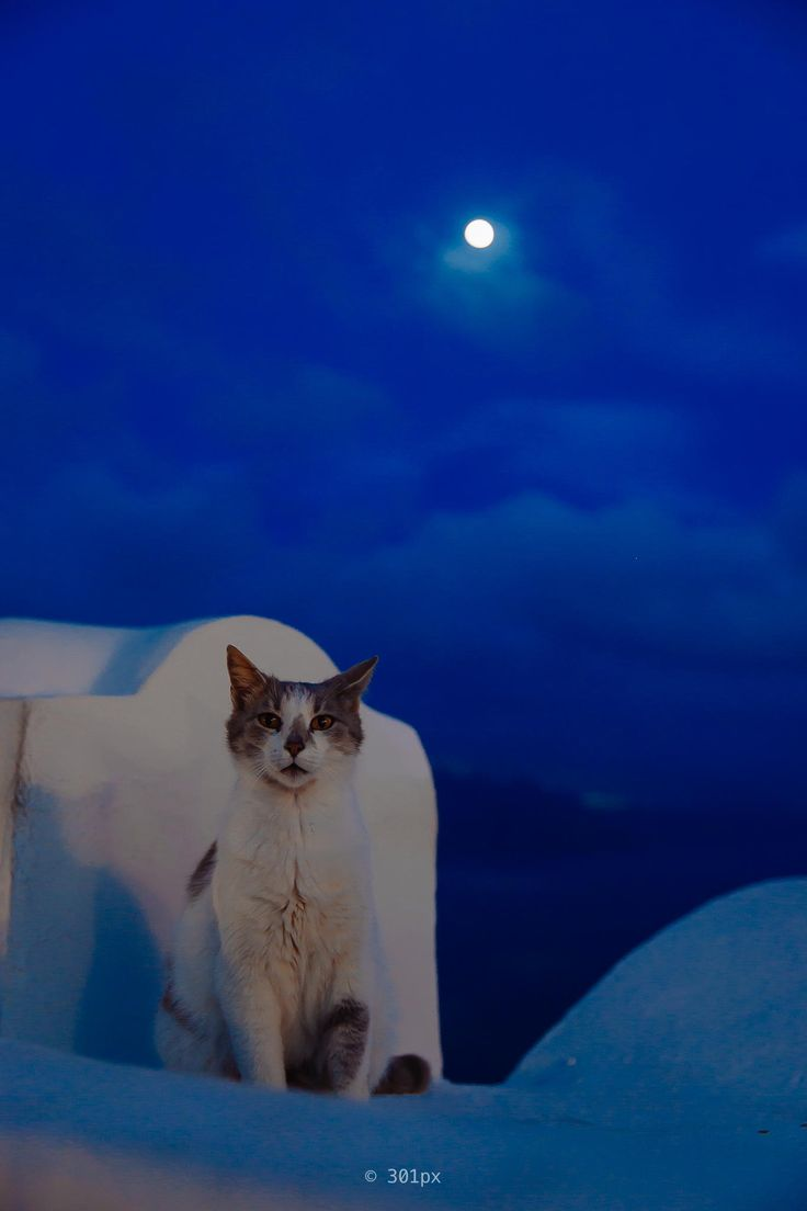 Cat under the Santorini Moon