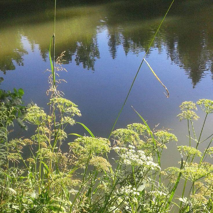 #staw#las#Zabratówka#Rzeszów#koper #zioła #woda #pond #water #forest #green #nature