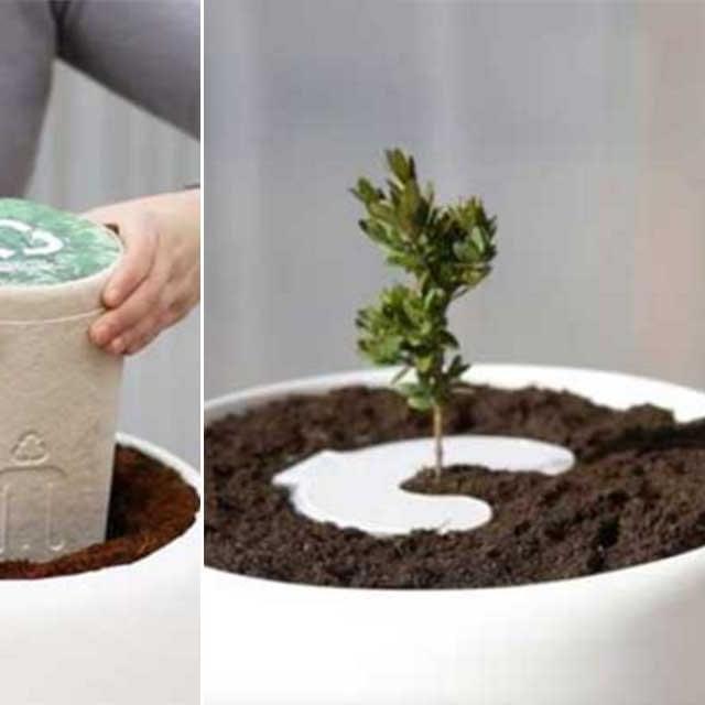 Con este sistema puedes convertir a un ser querido en árbol y cuidarlo a través de tu celular