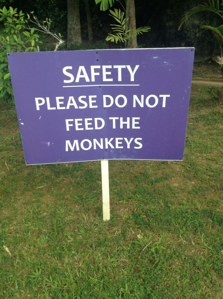 Please do not feed the Monkeys! Warning sign from Langkawi Island Malaysia - should also be in our monkeyshrine head office..