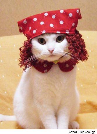 .: Green Gables, Beautiful Animal, Red Hair, Funny Cat, Cute Cat, Hair Cut, Cat Costumes, Gingers Cat, Pet Costumes