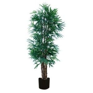 Thin Leaf Raphis Palm  ww.st-barts.com.au