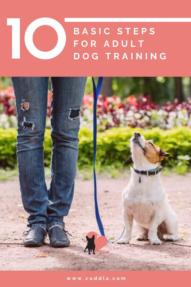 Training Basics For Adult Dogs Where To Start Socializing Dogs