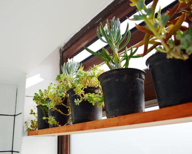 Succulents at a modern industrial bathroom renovation