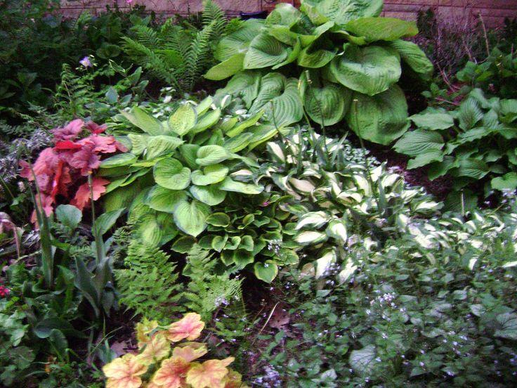 Garden Design Ideas For Small Shady Gardens 50 best shade gardens images on pinterest | garden ideas, gardens