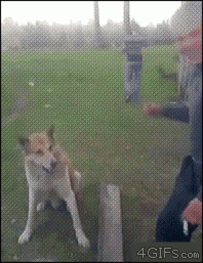 Hello , I am a dog :D