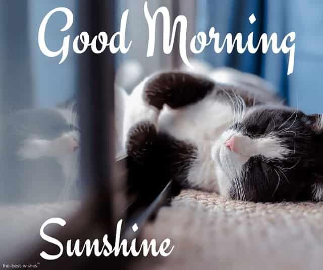 Lovely Good Morning Sunshine Images Best Collection Good Morning Sunshine Good Morning Cat Good Morning Funny